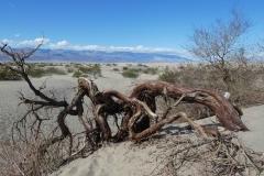 Death-Valley-20