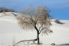 White-Sand-11