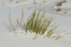 White-Sand-8