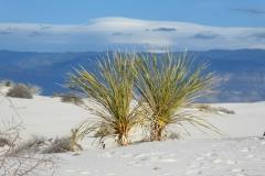 White-Sand-9